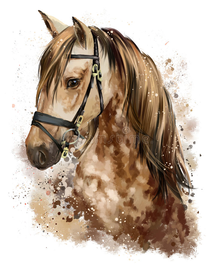 Końskiej głowy rysunek royalty ilustracja