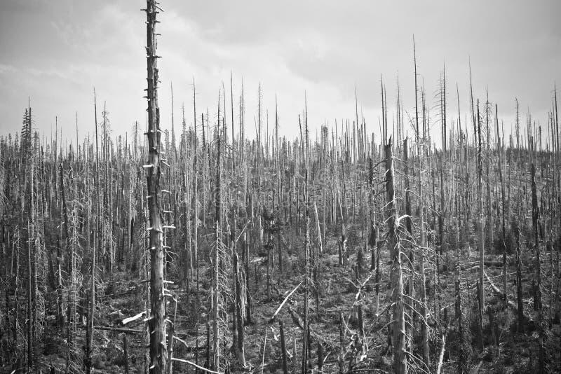 Kośćcowe resztki Dziki ogień zdjęcie stock