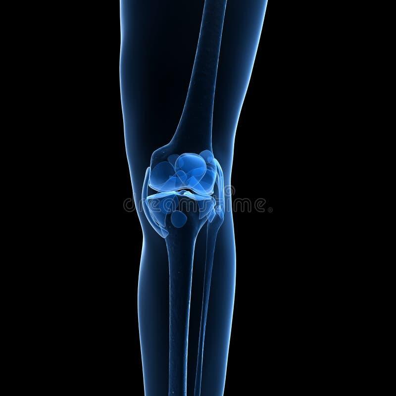 Download Kośćcowy kolano ilustracji. Ilustracja złożonej z anatomia - 28961426