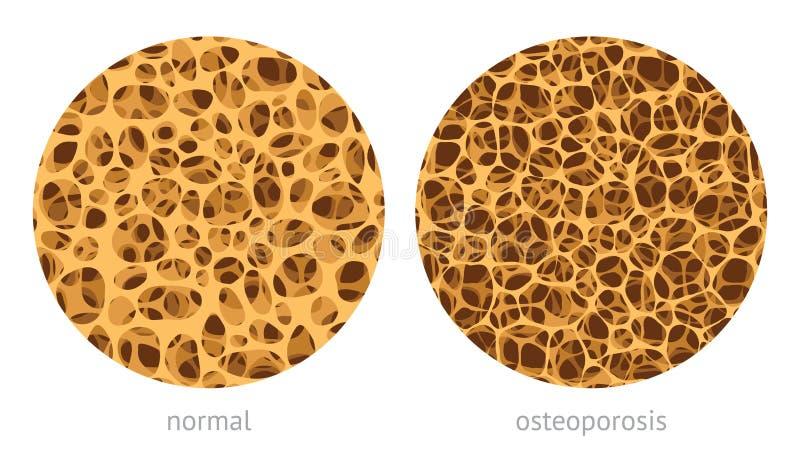 Kości bibulasta struktura ilustracja wektor