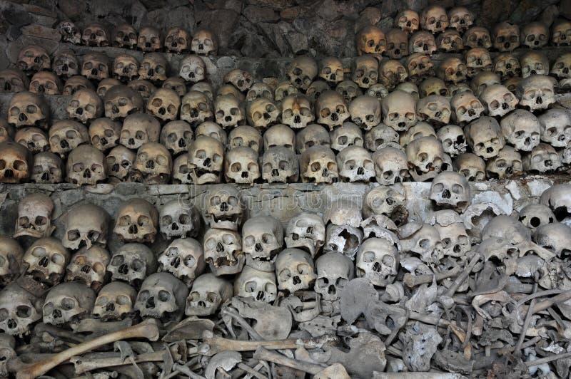 kości czaszki fotografia royalty free