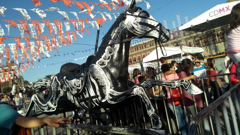 Kości koń zdjęcia royalty free