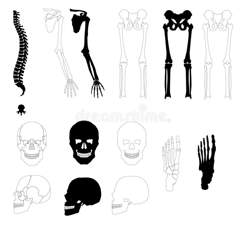 kości ludzkie ilustracja wektor