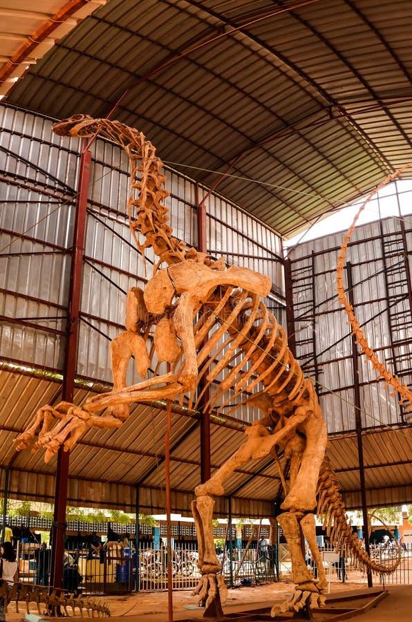 Kościec dinosaura Jobaria tiguidensis w Niamey, Niger obraz stock