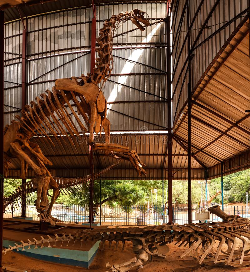 Kościec dinosaura Jobaria tiguidensis w Niamey, Niger zdjęcia stock