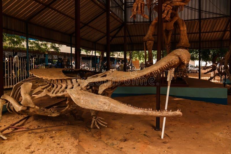 Kościec dinosaura Sarcosuchus imperator w Niamey, Niger zdjęcie royalty free