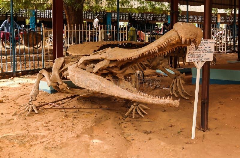 Kościec dinosaura Sarcosuchus imperator w Niamey, Niger zdjęcie stock