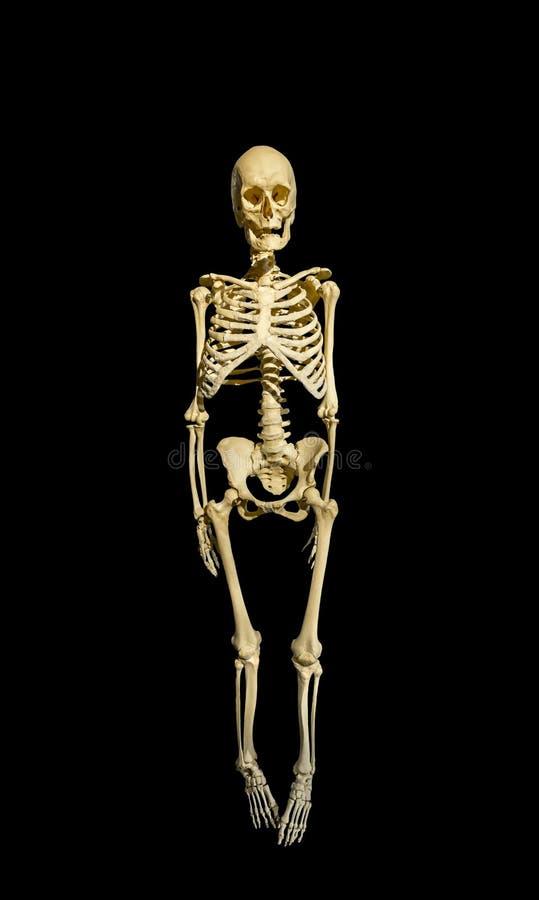 Kościec mężczyzna odizolowywający na czarnym tle fotografia royalty free