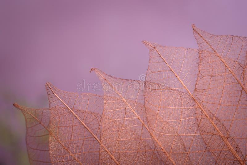 Kościec opuszcza na blured tle, zakończenie up zdjęcie royalty free