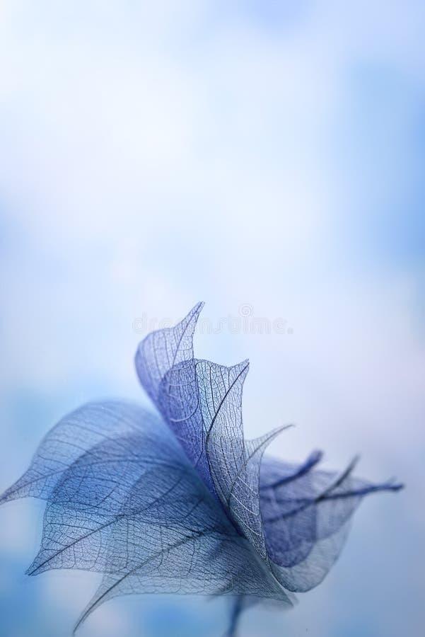 Kościec opuszcza na blured tle, zakończenie up fotografia royalty free