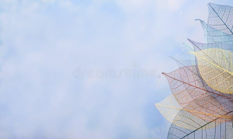 Kościec opuszcza na blured tle, zakończenie up fotografia stock