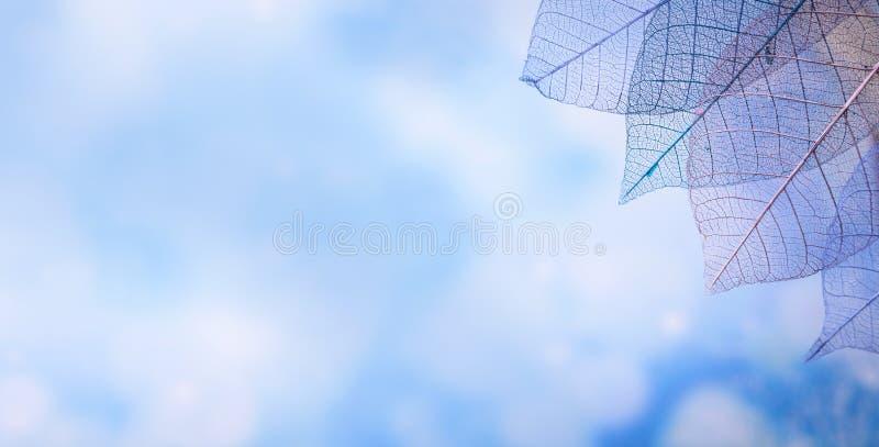 Kościec opuszcza na blured tle, zakończenie up obrazy royalty free