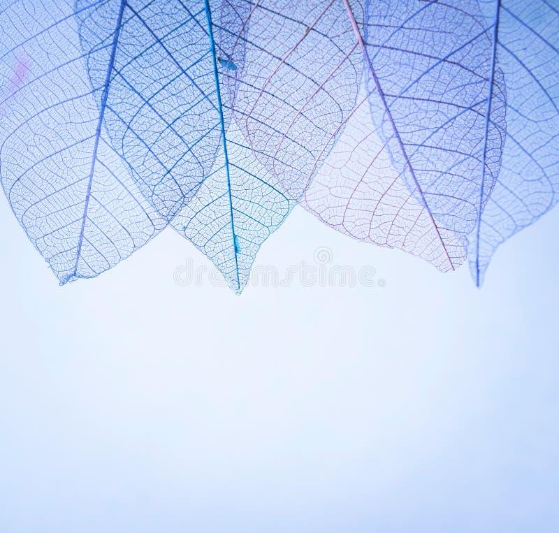Kościec opuszcza na blured tle, zakończenie up obrazy stock