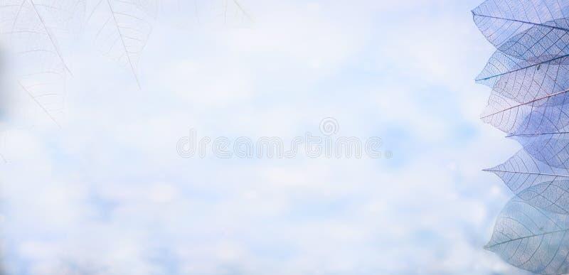 Kościec opuszcza na blured tle, zakończenie up zdjęcia royalty free