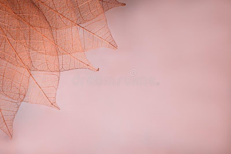 Kościec opuszcza na blured tle, zakończenie up zdjęcia stock