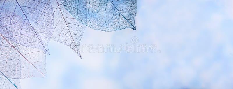 Kościec opuszcza na blured tle, zakończenie up zdjęcie stock