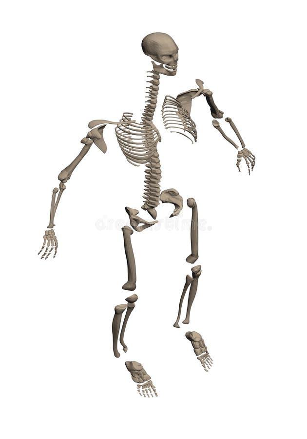 Kościec rozmontowywający na kości ilustracja wektor