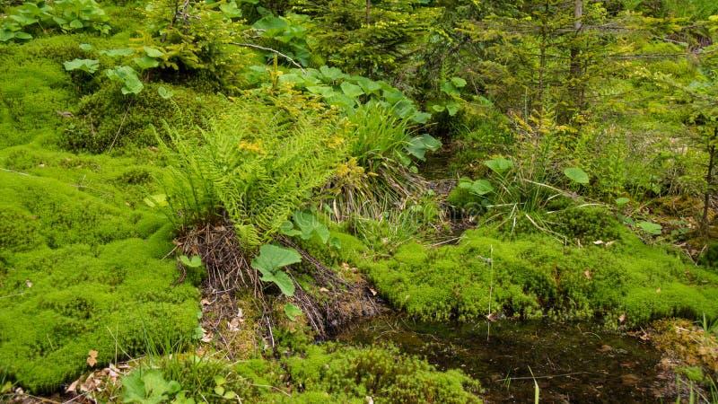 Koślawa rzeka przez mech łóżka zdjęcie royalty free