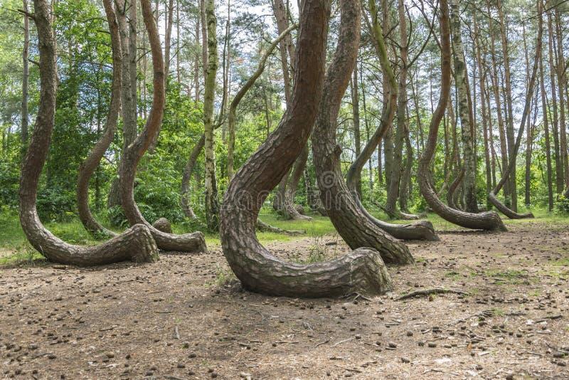 Koślawy drewno w Polska zdjęcia stock