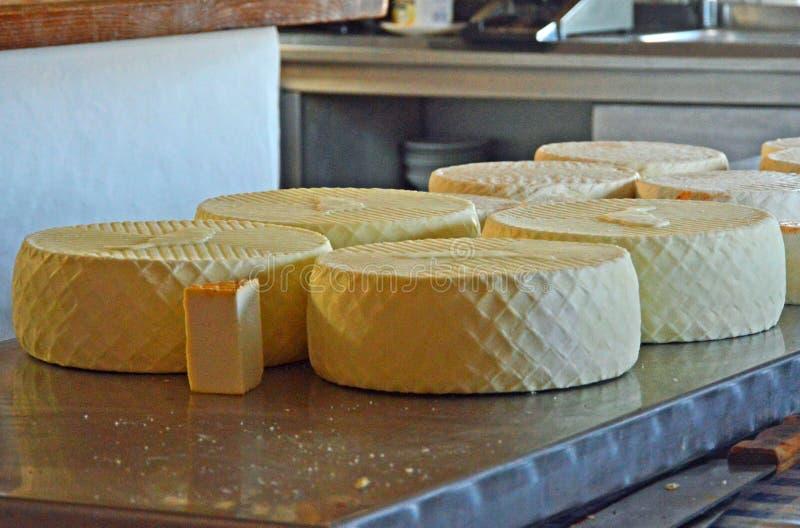 Koźli ser od Fuerteventura obraz royalty free