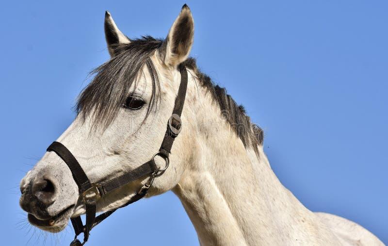 Koń, kantar, Koński hals, uzda