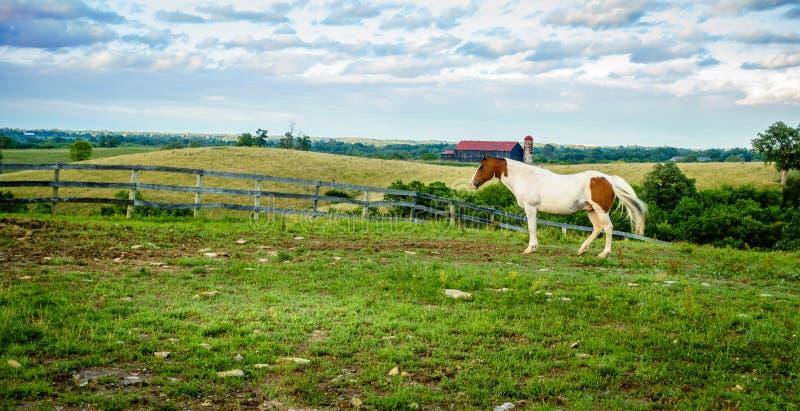 Ko? na gospodarstwie rolnym w Kentucky obraz royalty free