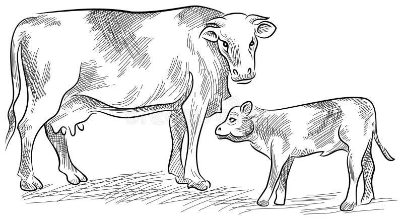 Ko och kalv stock illustrationer