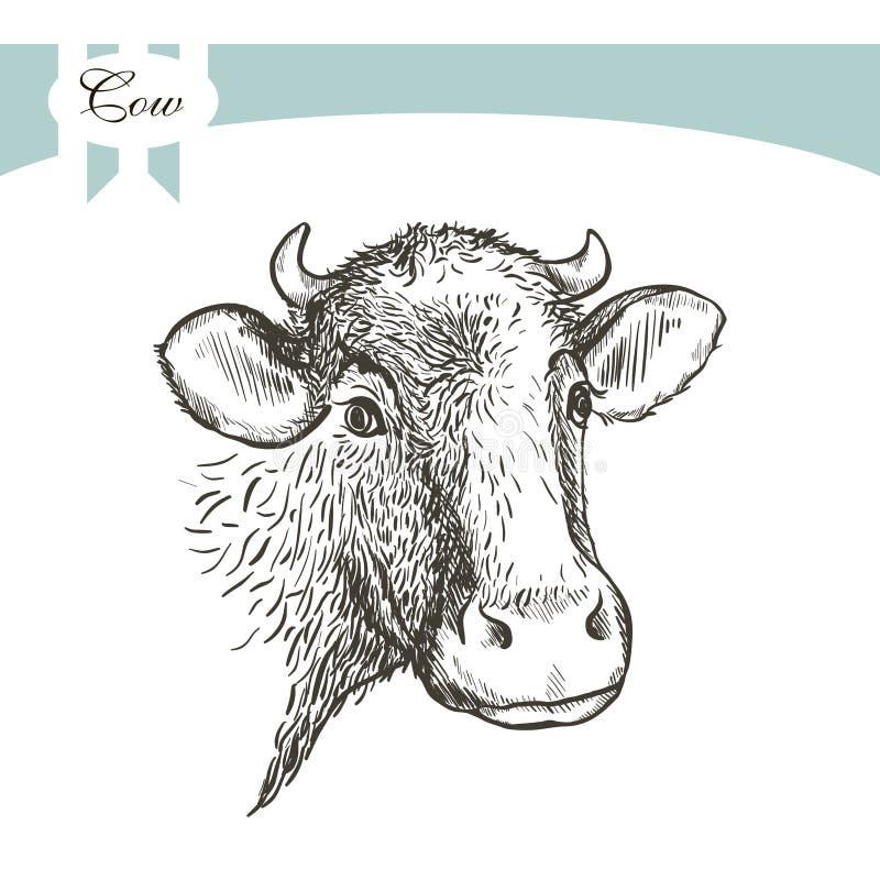 Ko på en wihtebackgraund stock illustrationer