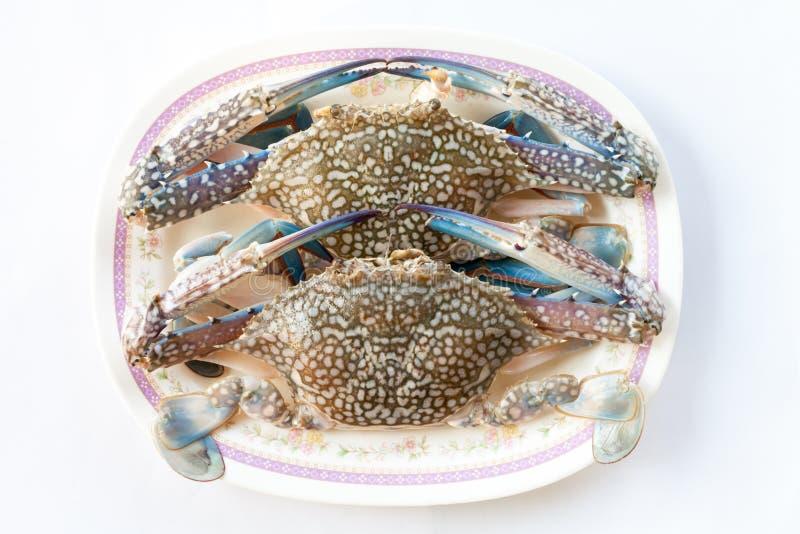 Download Koński krab na bielu ilustracji. Ilustracja złożonej z ocean - 53792101