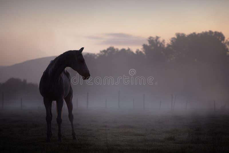 Download Koński portret zdjęcie stock. Obraz złożonej z biały - 53781338