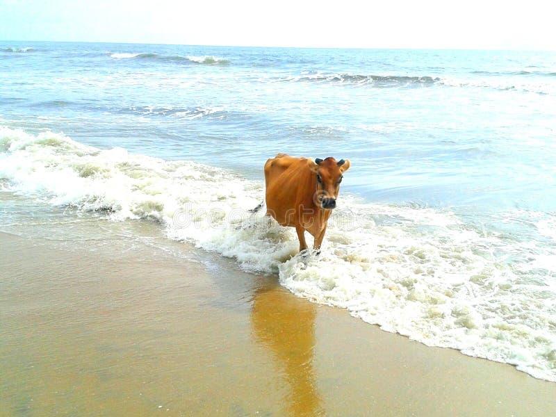 Ko som kopplar av på stranden arkivfoton