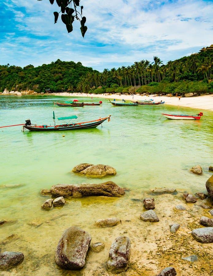 Ko Tao rekinu zatoka fotografia stock