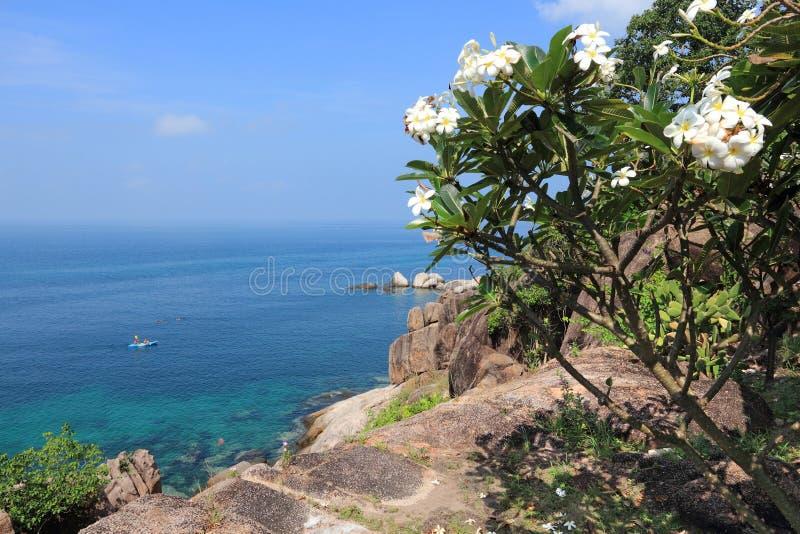 Ko Tao, Thailand. Thailand landscape - Koh Tao island in Surat Thani province. Plumeria obtusa flowers stock image
