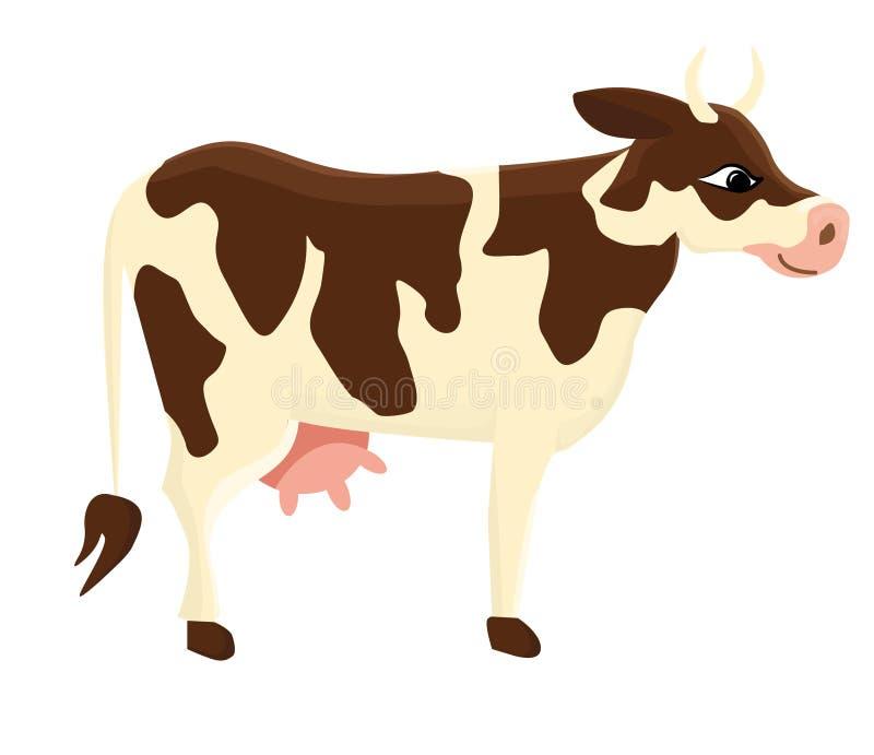 ko Vit ko med bruna fläckar Traskat horned husdjur stock illustrationer