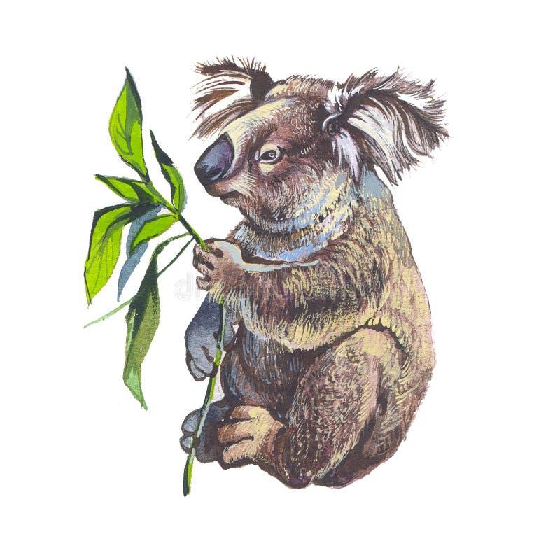 Download Koala stock illustration. Image of creature, cartoon - 16488015