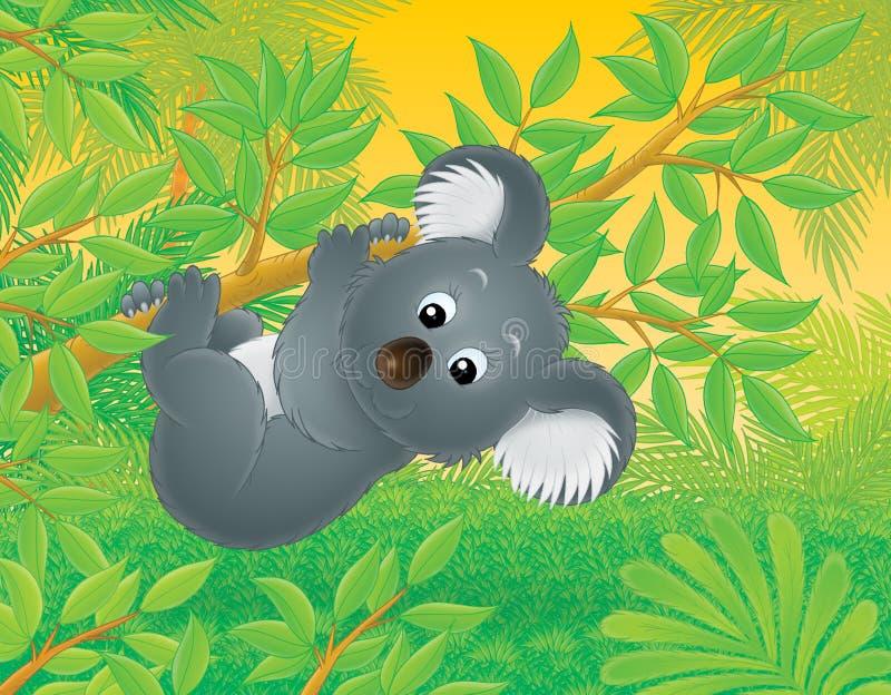 Koala ilustração royalty free
