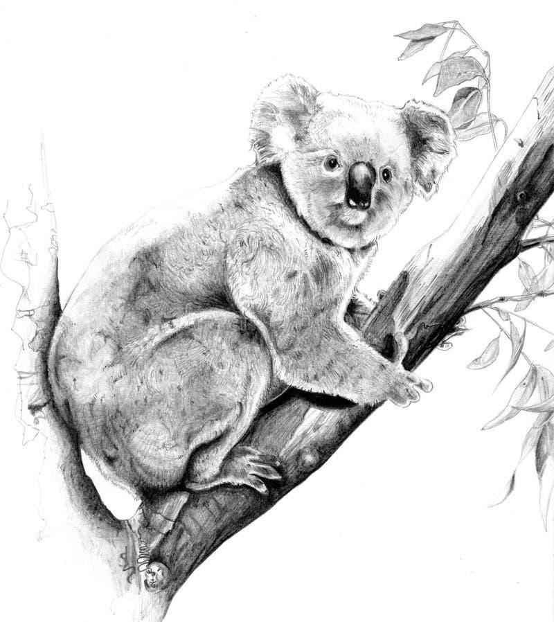 koala royalty ilustracja