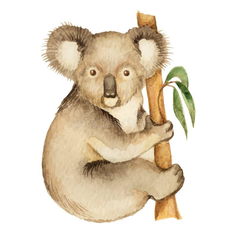 koala stock abbildung