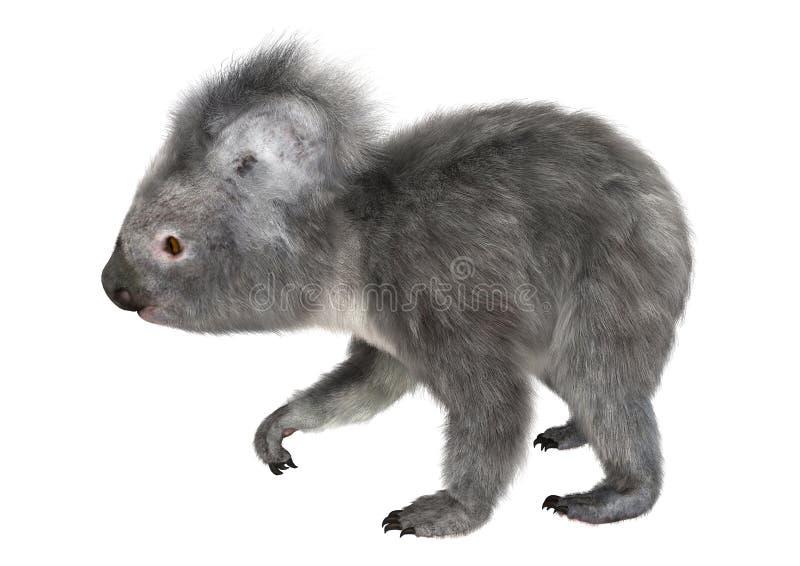 koala fotografia de stock royalty free