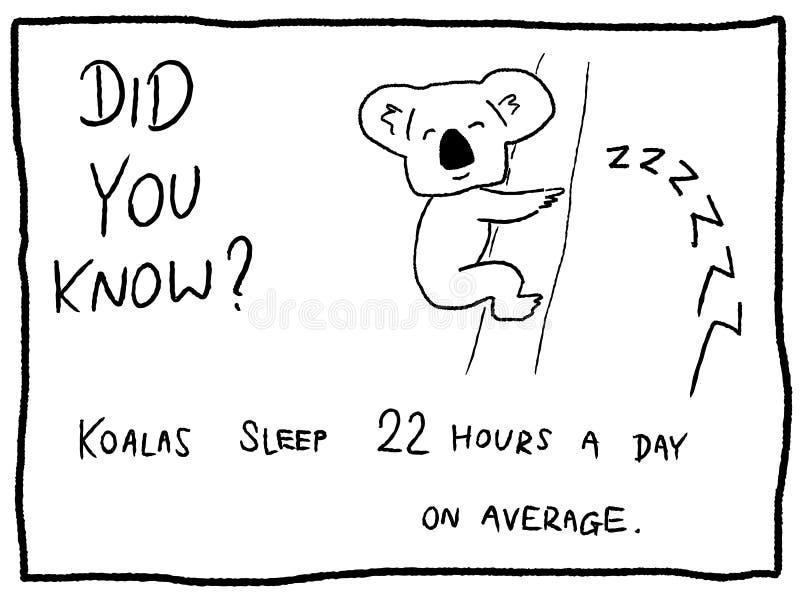 koala ilustración del vector