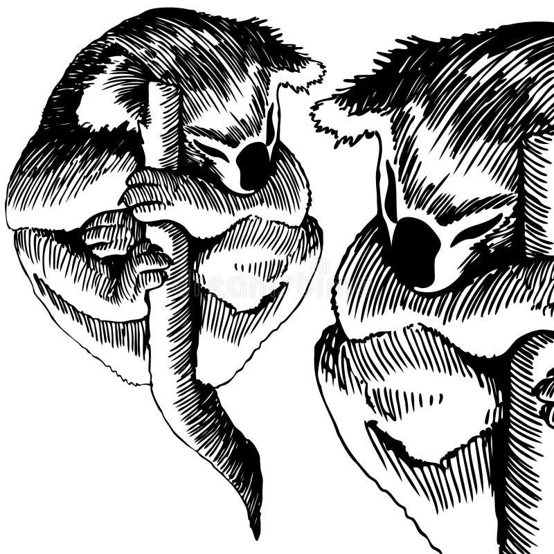 koala niedźwiadkowy czarny biel ilustracji