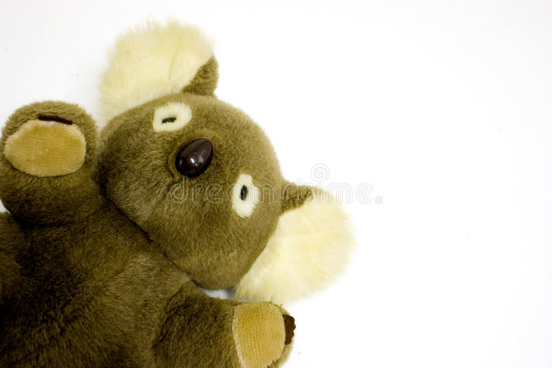 koala niedźwiedzi fotografia stock