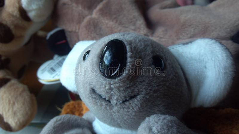 Koala Stuffed Animal stock photo