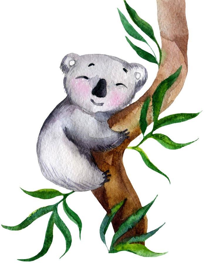 Koalakoala auf einem Baum lizenzfreie abbildung