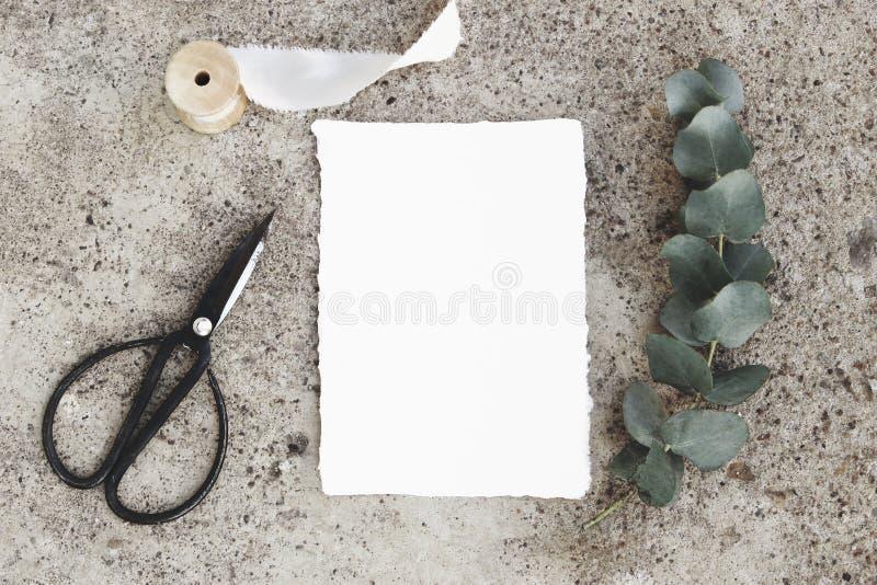 Kobieca projektująca akcyjna fotografia, kartka z pozdrowieniami mockup Zielona srebnego dolara eukaliptusa gałąź, czarni rocznik zdjęcia royalty free