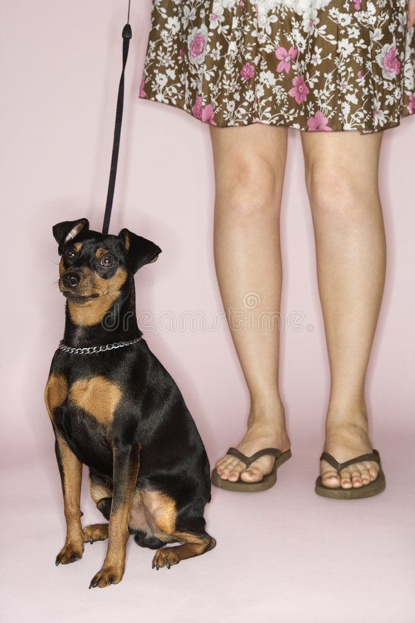 kobiece nogi psa fotografia royalty free