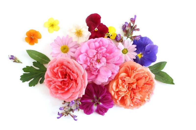 Kobiecy kwiecisty skład Bukiet jadalni kwiaty i ziele dzicy i ogrodowi Stare róże, mędrzec, pansy, stokrotka, ślaz zdjęcia stock