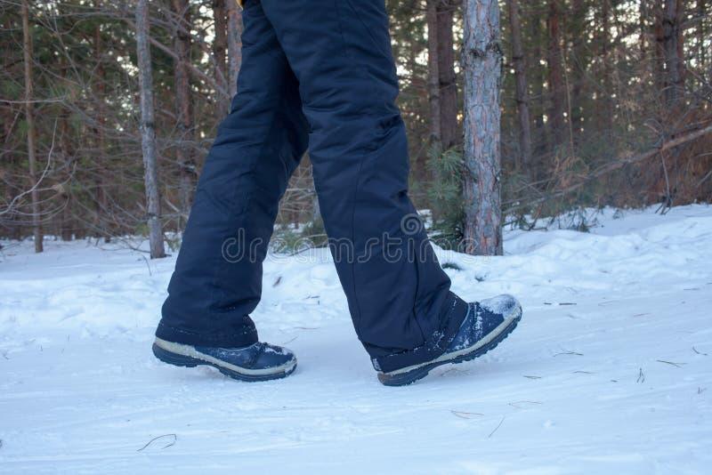 Kobiet nogi w butach zamykają w górę śnieżystej ścieżki w zima lesie, tylni widok fotografia royalty free