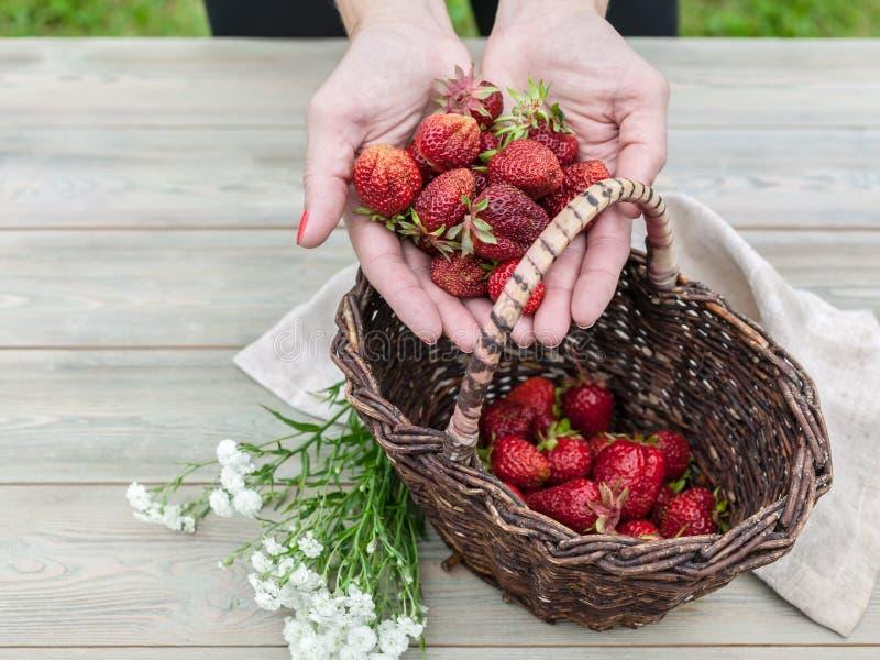 Kobiet ręk chwyta dojrzałe truskawki Truskawki w koszu Lato karmowy skład na drewnianym stole zdjęcia royalty free
