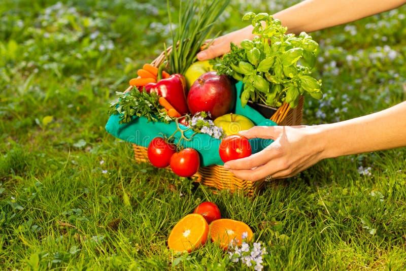 Kobiet ręki trzyma łozinowego kosz z warzywami i owoc, zakończenie w górę zdjęcie royalty free